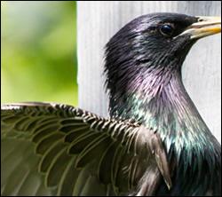 bird control Murphy