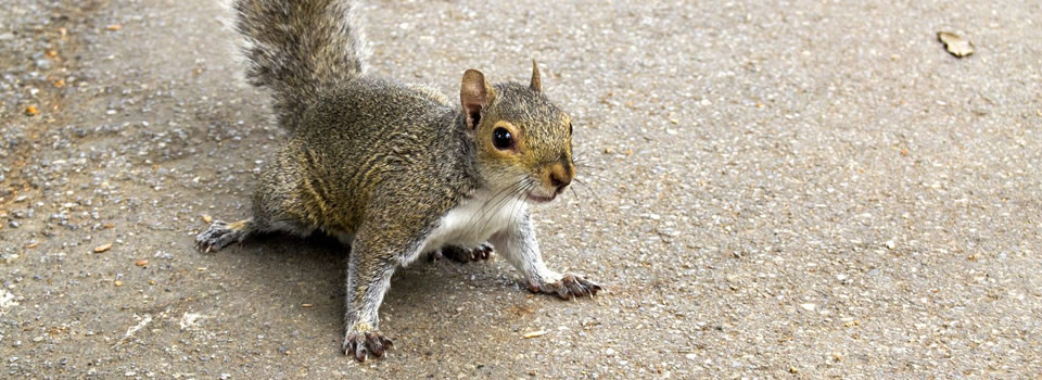 Aldine squirrel control